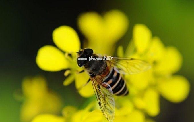 俱乐部论坛美图-小蜜蜂